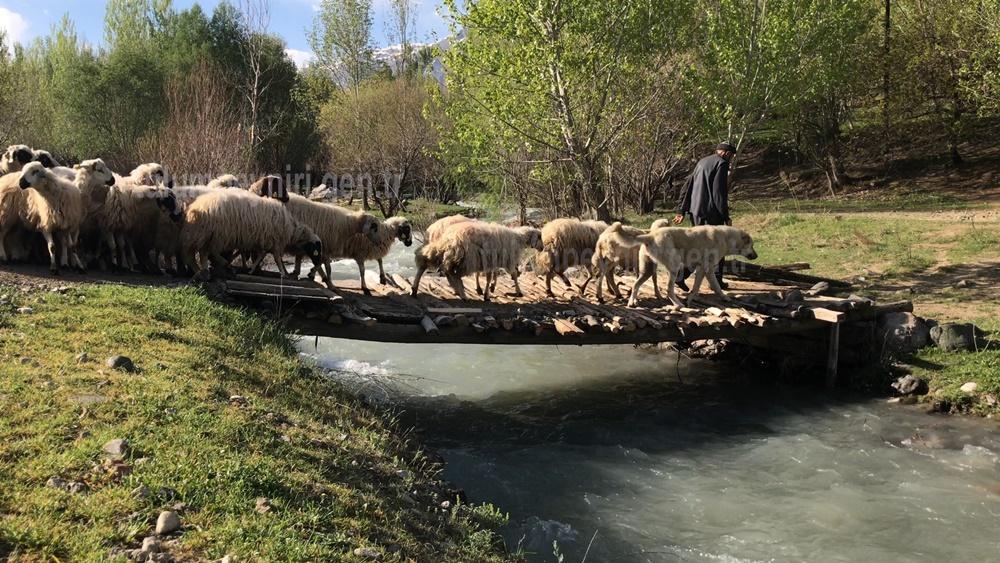 Photo of Erzincan'da yaylalara göç başladı